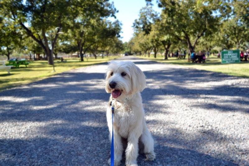 Benson the dog