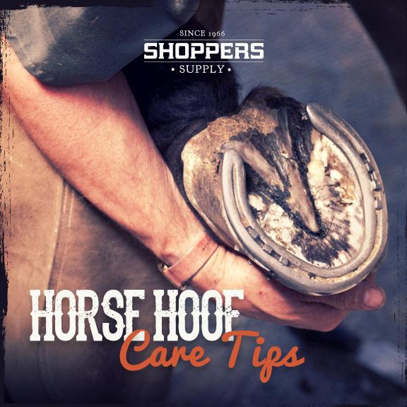 Horse Hoof Care Tips